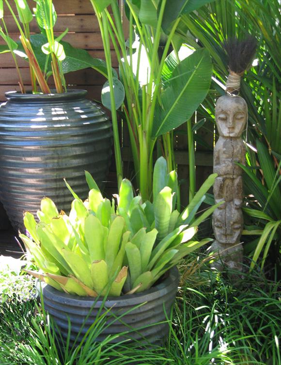 Living Colour Landscapes Courtyard Design Port Douglas