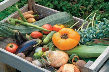vegetables_box